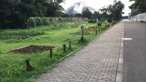 夢の島公園